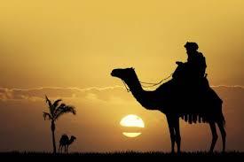 Questa immagine ha l'attributo alt vuoto; il nome del file è camel.jpeg